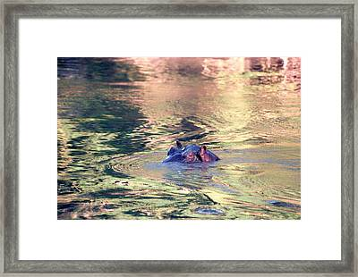 Lonely Hippo Framed Print by Sebastian Musial