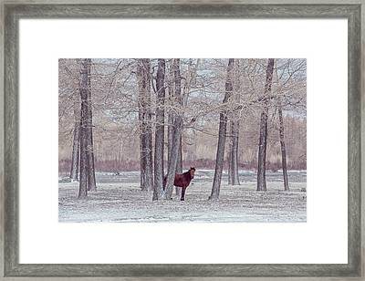 Lonely Horse In Front Of Snowy Winter Forest Framed Print by Oksana Ariksina