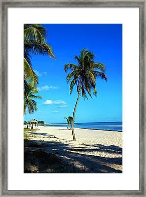Lonely Palm Framed Print by Susanne Van Hulst