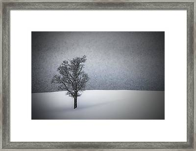 Lonely Tree Idyllic Winterlandscape Framed Print by Melanie Viola