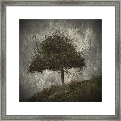 Lonely Tree Framed Print by Stelios Kleanthous