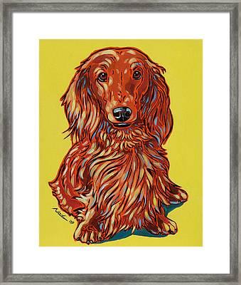 Long Haired Dachshund Framed Print by Nadi Spencer