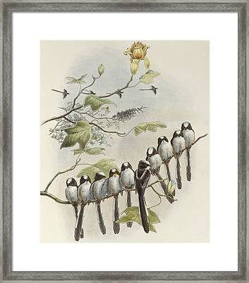 Long-tailed Tit  Framed Print by John Gould