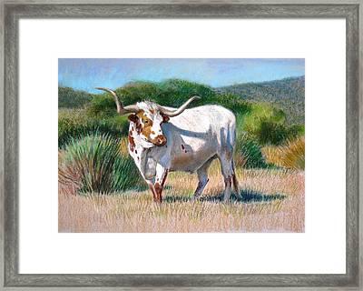 Longhorn Bull Framed Print by Sue Halstenberg