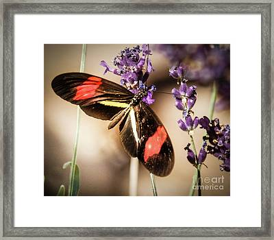 Longwing Butterfly Framed Print by Robert Bales