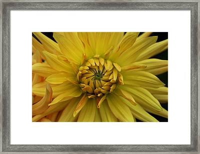 Look Closer II Framed Print by Andrea Guariglia