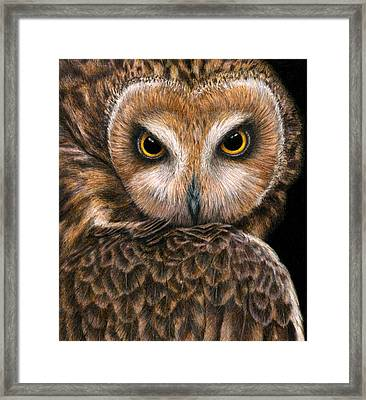Look Into My Eyes Framed Print by Pat Erickson