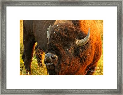 Lookin For Some Action Framed Print by Adam Jewell