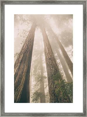 Looking At Giants Framed Print by Kunal Mehra