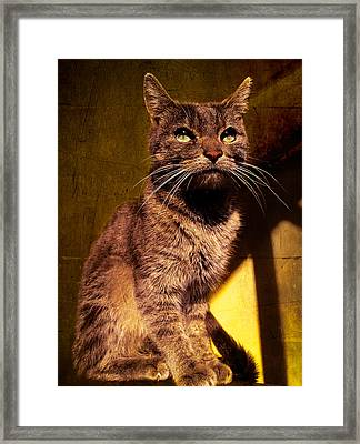Looking At The Sun Framed Print by Loriental Photography