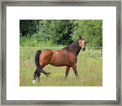 Looking At You Looking At Me Framed Print by Odd Jeppesen