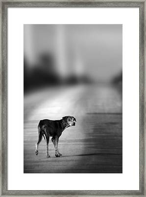 Looking Back Framed Print by Amanda And Christopher Elwell