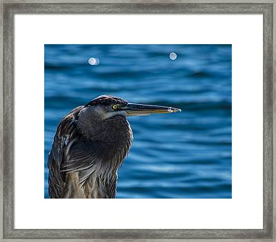Looking For Lunch Framed Print by Marvin Spates