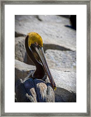 Looking Good Framed Print by Marvin Spates