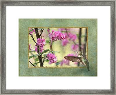 Looking Into Spring Framed Print by Angie Vogel