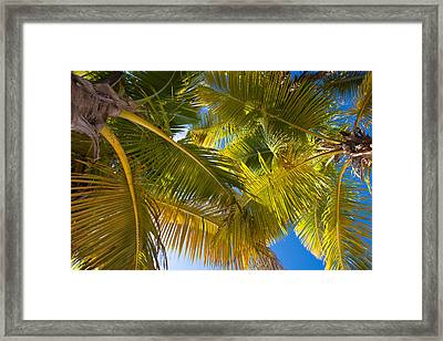 Looking Up Framed Print by Adam Romanowicz
