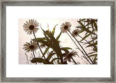 Looking Up Framed Print by Amy Tyler