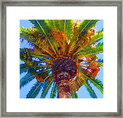 Looking Up At Palm Tree  Framed Print by Amy Vangsgard