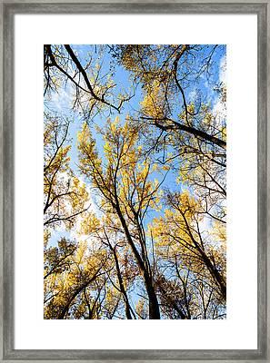 Looking Up Framed Print by Bill Kesler