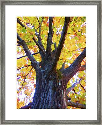 Looking Up From Under The Tree  1 Framed Print by Lanjee Chee