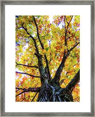 Looking Up From Under The Tree  2 Framed Print by Lanjee Chee