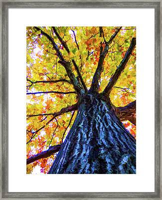 Looking Up From Under The Tree  3 Framed Print by Lanjee Chee