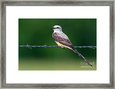 Lord Of The Flies Framed Print by Gary Holmes