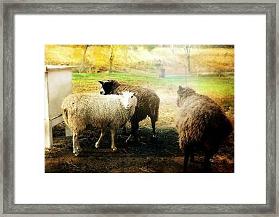 Lost And Found Framed Print by Diana Angstadt
