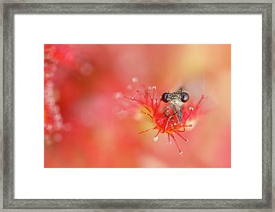 Lost In Red Framed Print by Roeselien Raimond
