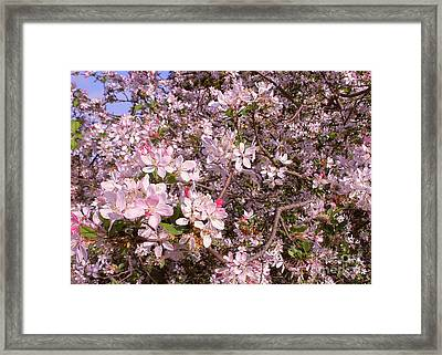 Lots Of Blossoms By Kaye Menner Framed Print by Kaye Menner