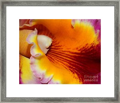 Lotsa Color Framed Print by Sabrina L Ryan