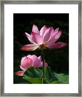 Lotus Beauties--upstaged Dl048 Framed Print by Gerry Gantt