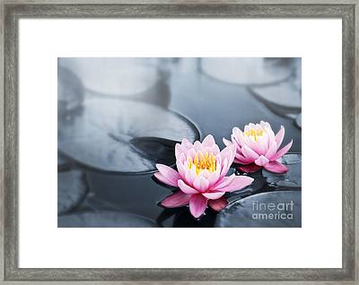 Lotus Blossoms Framed Print by Elena Elisseeva