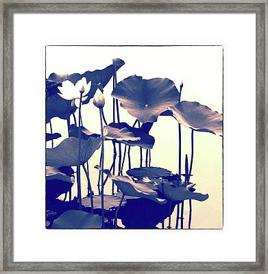 Lotus Entwined Framed Print by Jessica Jenney