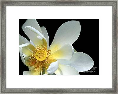 Lotus From Above Framed Print by Sabrina L Ryan