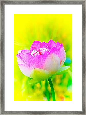 Lotus Framed Print by Michael Hubley