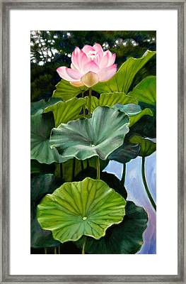 Lotus Rising Framed Print by John Lautermilch