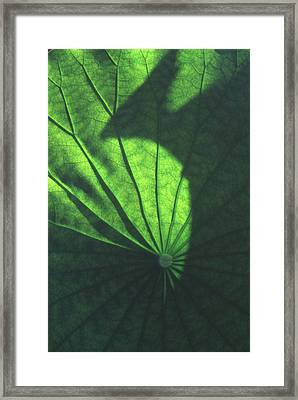 Lotus Shadow Of Phoenix Framed Print by Lian Wang
