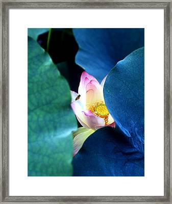 lotus Temptation of depth Framed Print by Lian Wang