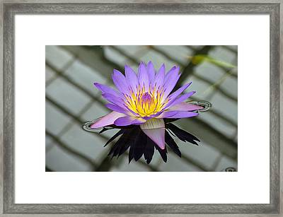 Lotus Framed Print by Vari Buendia