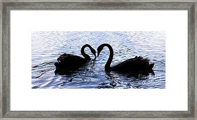 Love Birds On Swan Lake Framed Print by Jorgo Photography - Wall Art Gallery