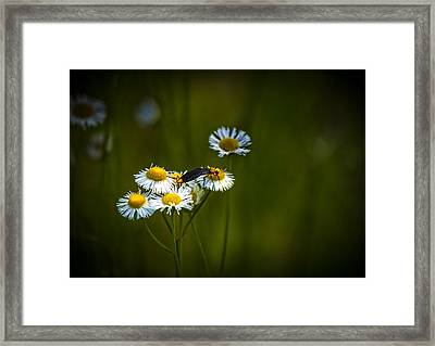 Love Bugs Framed Print by Marvin Spates