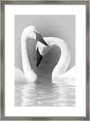 Love In Black And White Framed Print by Larry Ricker