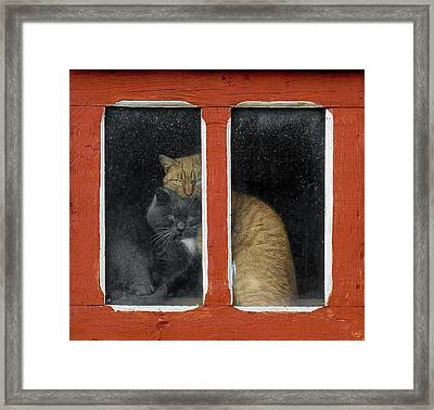 Love Framed Print by Mihnea Turcu