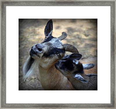 Love On A Farm Framed Print by Karen Wiles