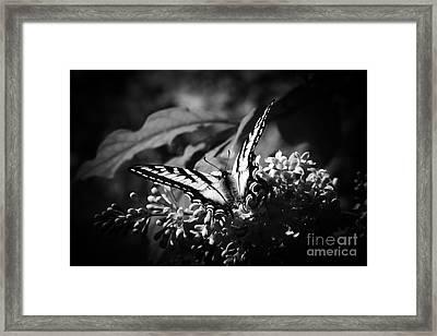 Love Remains A Secret Framed Print by Sharon Mau