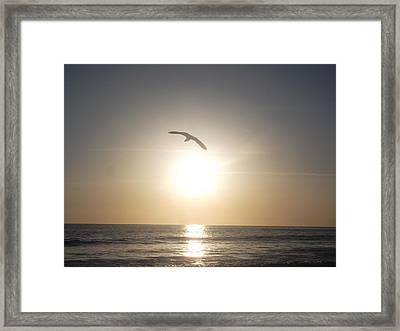 Love Soaring Framed Print by Patricia Lyons