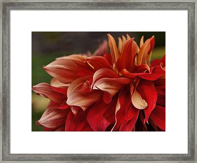 Lovely In Red Framed Print by Patricia Strand