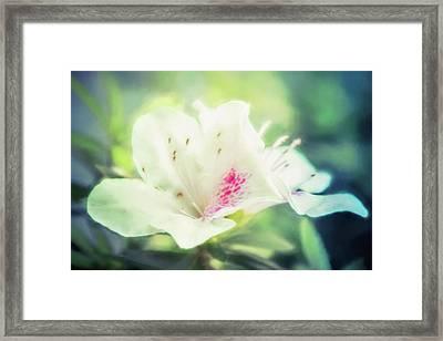 Lovely In White Framed Print by Terry Davis