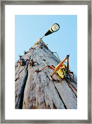 Lubber's Pole Framed Print by Lynda Dawson-Youngclaus